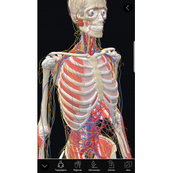 3D Organon Anatomy | Enterprise Edition