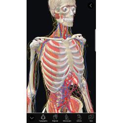 3D Organon Anatomy | Enterprise Edition